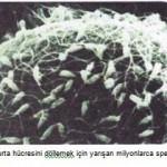 yumurtahcresinidllemekiinyaranspermler.jpg