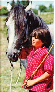 At, insanlara en yakın ve en yararlı hayvanlardan biridir.