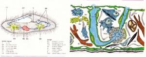 Terliksi hayvan ve süngerin çizimi ve organları