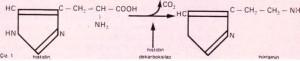 histamin çizelge 1