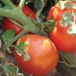 Organik Tarım nedir? İnsanlar ve Canlılar için Önemi ve Yararları