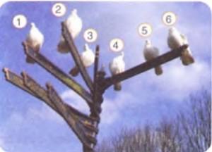 7. etkinlik kuşların çekim potansiyel enerji