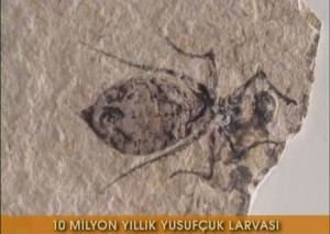 10 milyon yıllık yusufçuk fosili