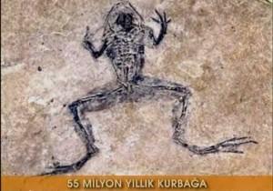 55 milyon yıllık kurbağa fosili