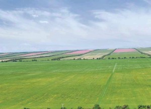 tarım alanlarında yapılan rüzgar perdeleri