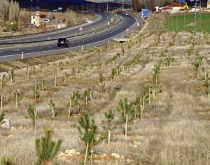 yol kenarı ağaçlandırması