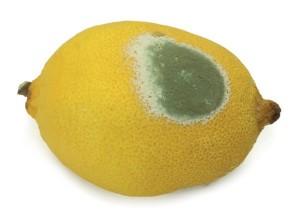 Limon küfü