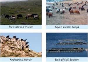 hayvancılık faaliyetleri