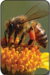 arılar mor ötesini görür_mini