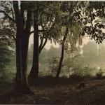 Paimpont ormanından (6070 ha) bir görünüş.