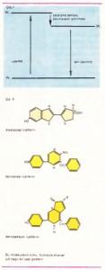 Bu moleküllerin tumu