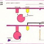 gen ile ilgili çizelge