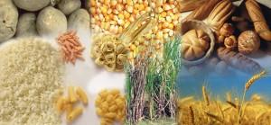 besinler nasıl faydalı hale gelir