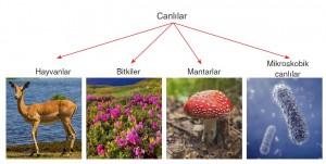canlılar örnekleri ve şeması