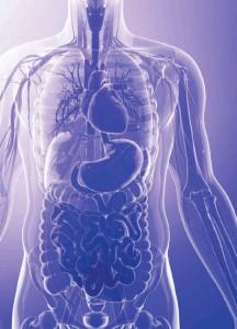 insanın organları en küçük yapı birimi