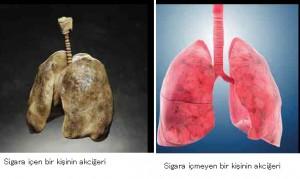 sigara içilen ve içilmeyen akciğer