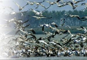 manyas kuş cenneti