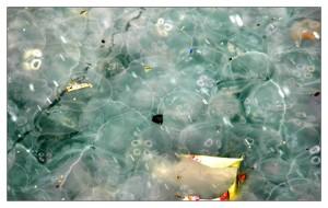 Atık suların oluşturduğu kirlilik sonrası üreyen zararlı canlılar