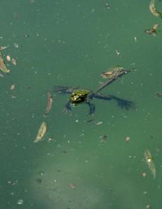 Kirli su görüntüsü