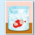 buzlu suya batırılmış balon