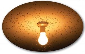 lambanın etrafına toplanan sinekler atom modeli