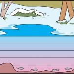 suyun yoğunluğu