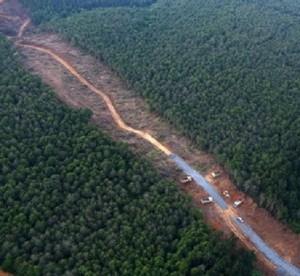 yol yapmak için doğal ortama verilen zarar