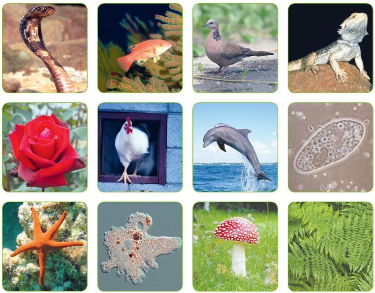 çevremizde gördüğümüz bitki ve hayvanlar