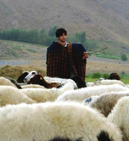 çoban ile röbortaj