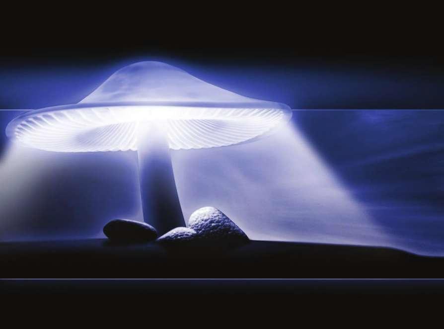 ışığın yansıması