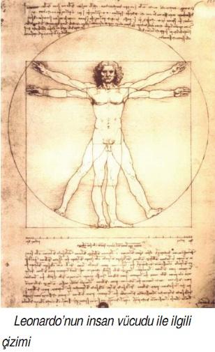 Leonardonun insan vücudu çizimi
