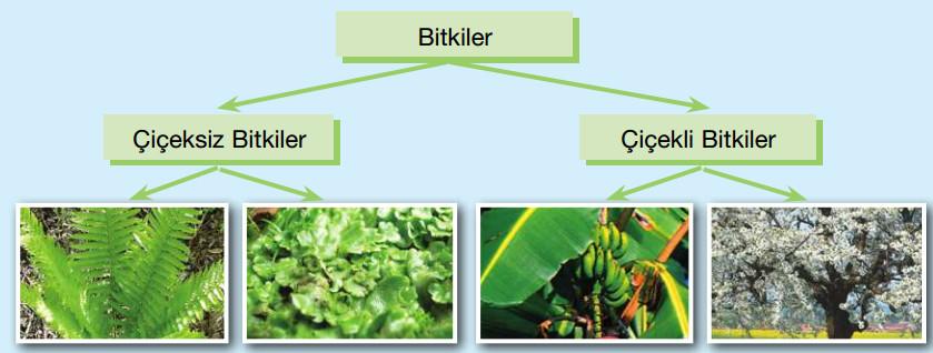 bitkilerin örnekli sınıflandırılması