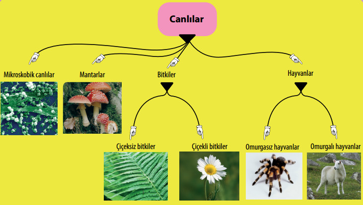 canlıların sınıflandırma şeması