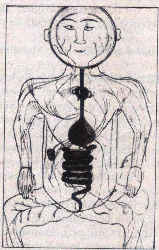 ibni Sinanın sindirim sistemini gösteren çizimi