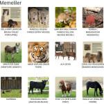 memeli hayvanat bahçesi hayvanları