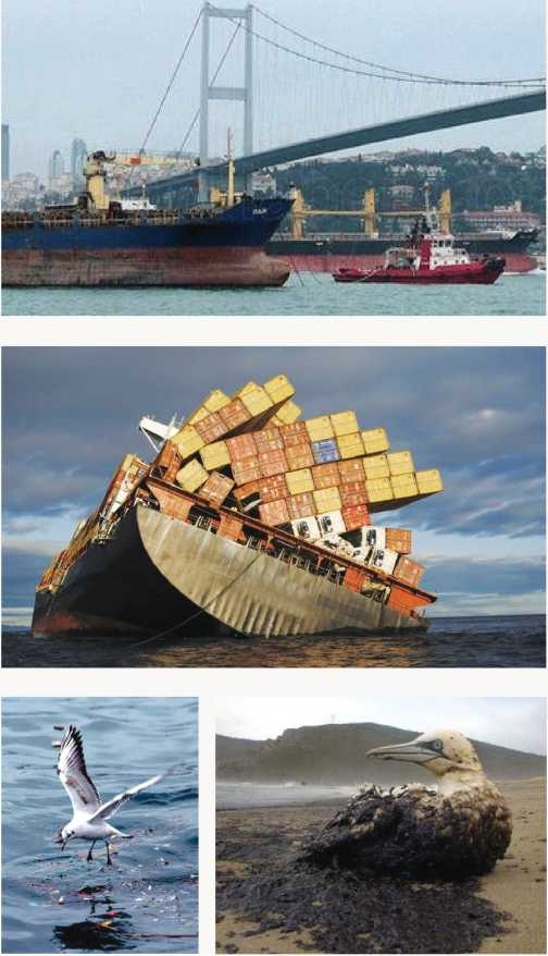 tanker kazasının canlılara verdiği zararlar