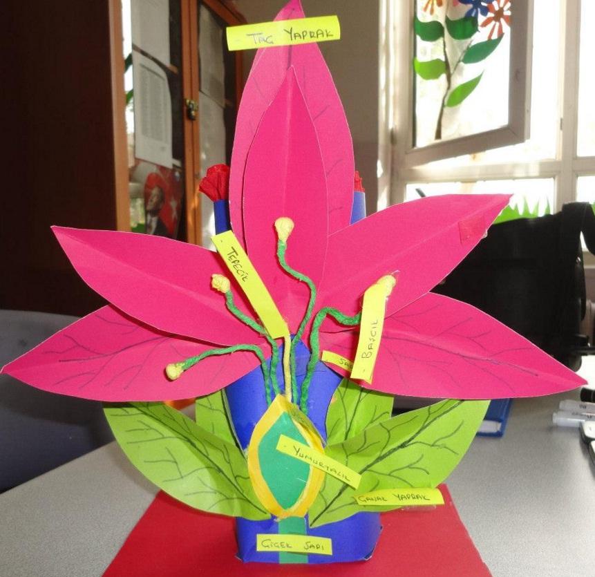 çiçeğin tüm kısımlarını gösteren model