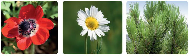 çiçekli bitki örnekleri