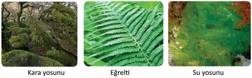 çiçeksiz bitki örnekleri