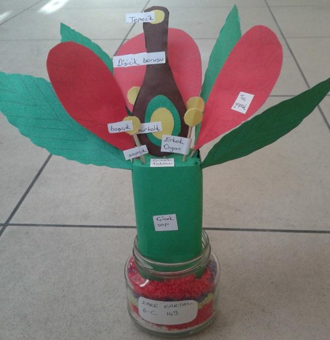 6. sınıf çiçeğin kısımları modeli