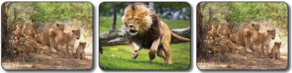 aslan popülasyonu
