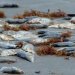 balık türleri neden azalıyor