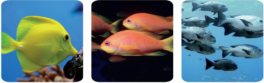 balıklara örnekler