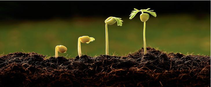 bitki gelişim süreci