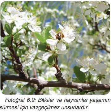 bitkiler ve hayvanlar biyoçeşitlilil