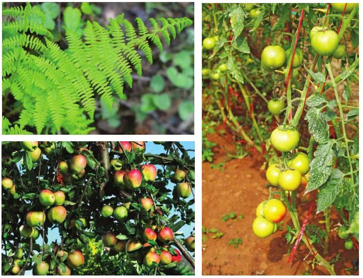 bitkilerden yeni bitkilerin oluşumu