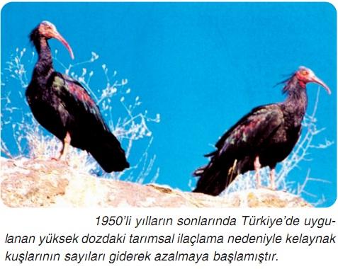 biyoçeşitlilik kelaynak kuşları