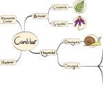 canlıları sınıflandırma şeması