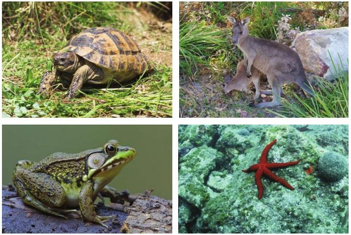 hayvanlarda çoğalma çeşitleri