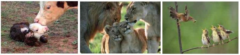 hayvanlarda üreme süreçleri